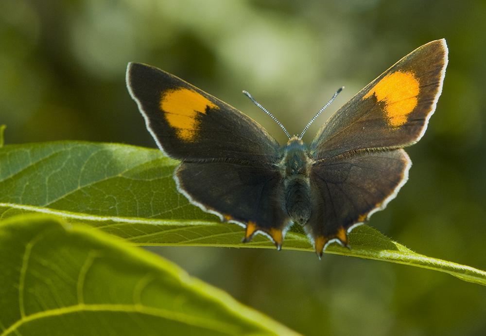 "фото ""Свет и тень"" метки: природа, насекомое"