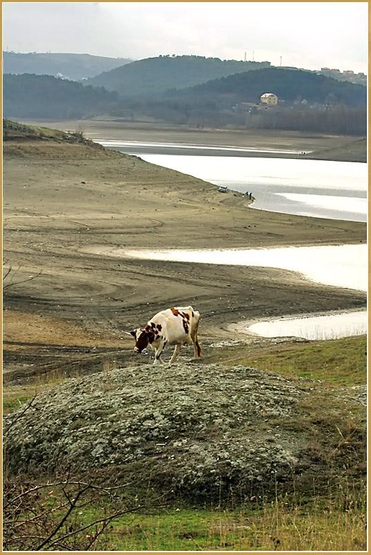 "фото ""Возле озера"" метки: пейзаж,"