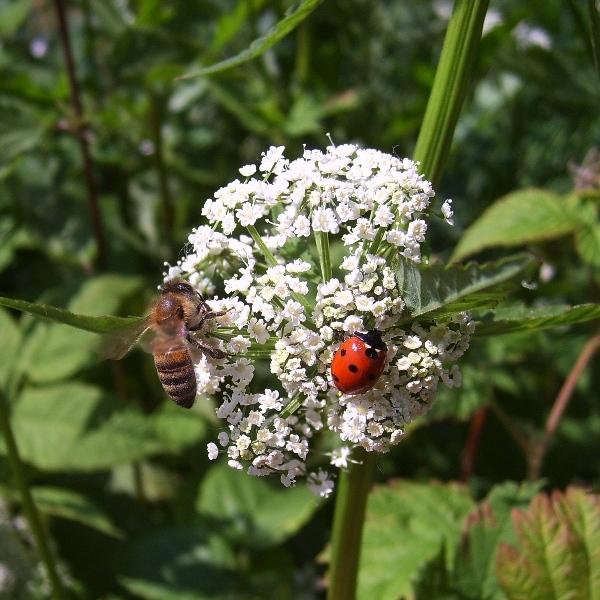 """фото """"Букашки на Шаре."""" метки: природа, насекомое"""
