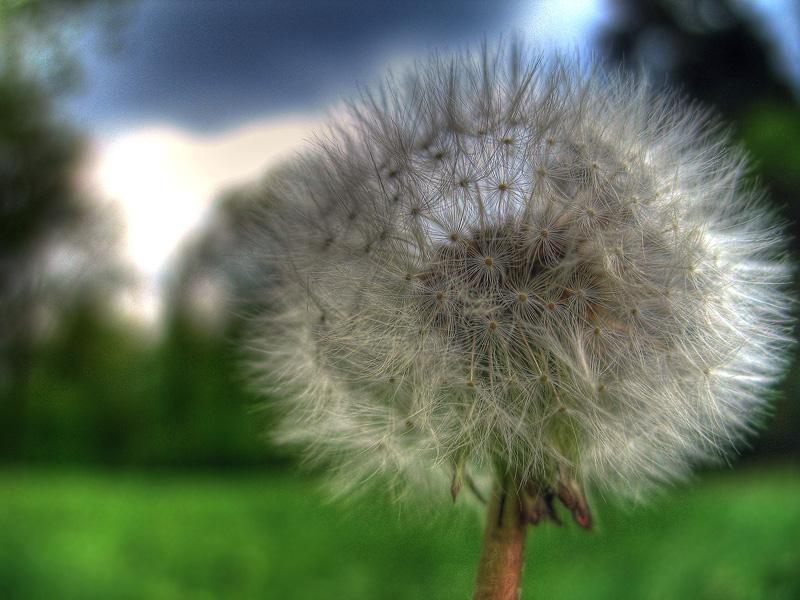 """фото """"Один против неба"""" метки: природа, макро и крупный план, цветы"""