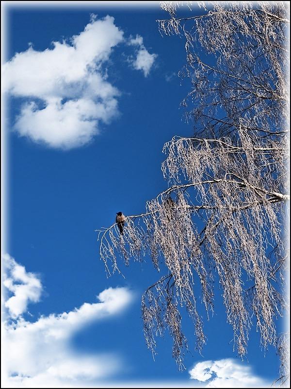 """фото """"МОРОЗ"""" метки: пейзаж, зима, облака"""