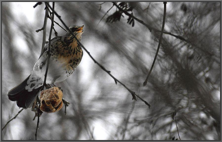 "фото ""Лакомство"" метки: природа, дикие животные"