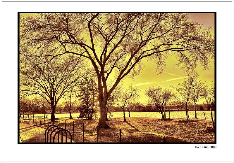 "фото ""Cherry trees in the winter"" метки: пейзаж,"