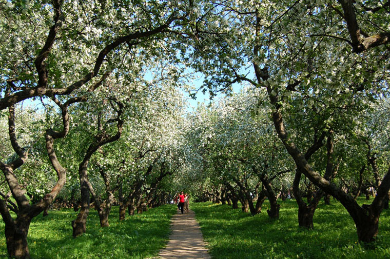 "фото ""Цветут сады"" метки: пейзаж, весна"