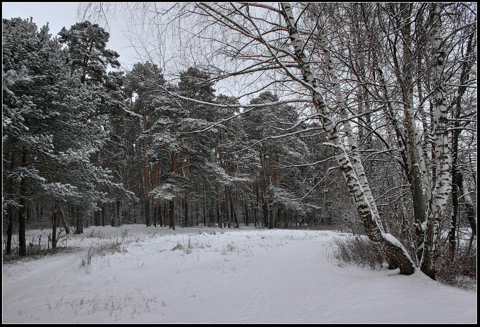 "photo ""Winter landscape"" tags: landscape, forest, winter"