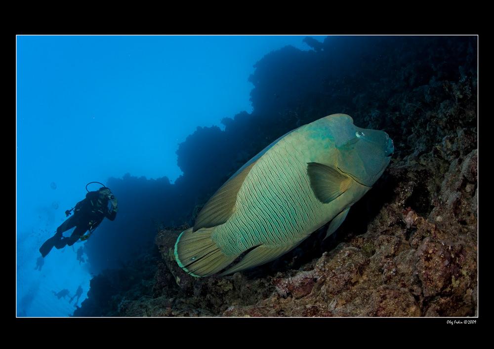 """фото """"Популярный объект ..."""" метки: подводные,"""