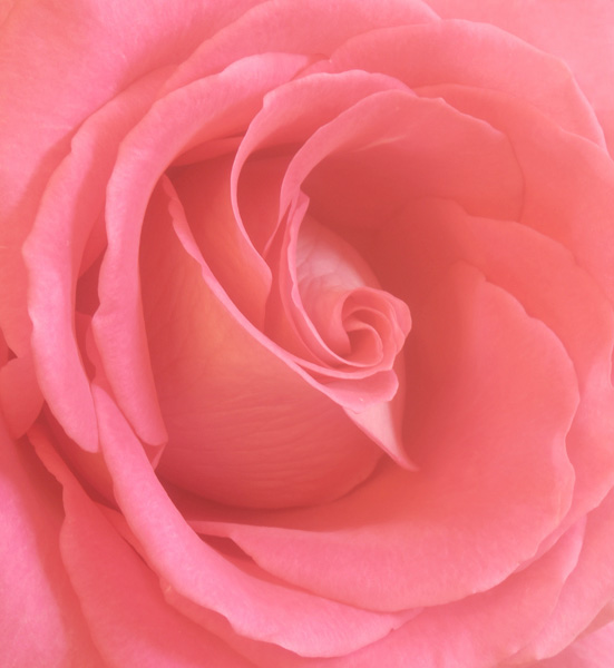 "фото ""Grace"" метки: природа, цветы"