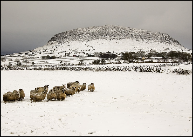 "photo ""Slemish Slieve at winter"" tags: landscape, mountains"