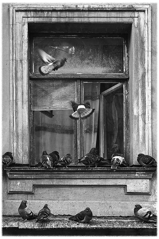 "фото ""Соседи"" метки: жанр, черно-белые,"