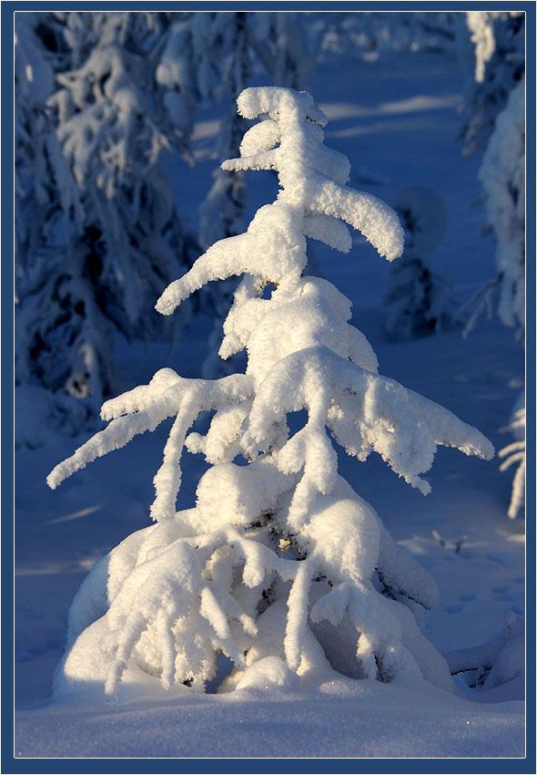 "фото ""Мороз снежком укутывал"" метки: природа, пейзаж, зима, цветы"