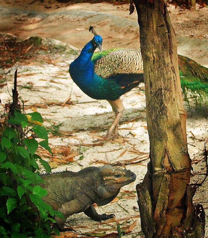 "photo ""***"" tags: nature, travel, South America, pets/farm animals"