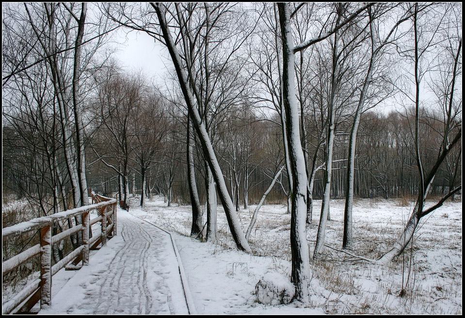 "photo ""Snow Graphics"" tags: landscape, forest, winter"