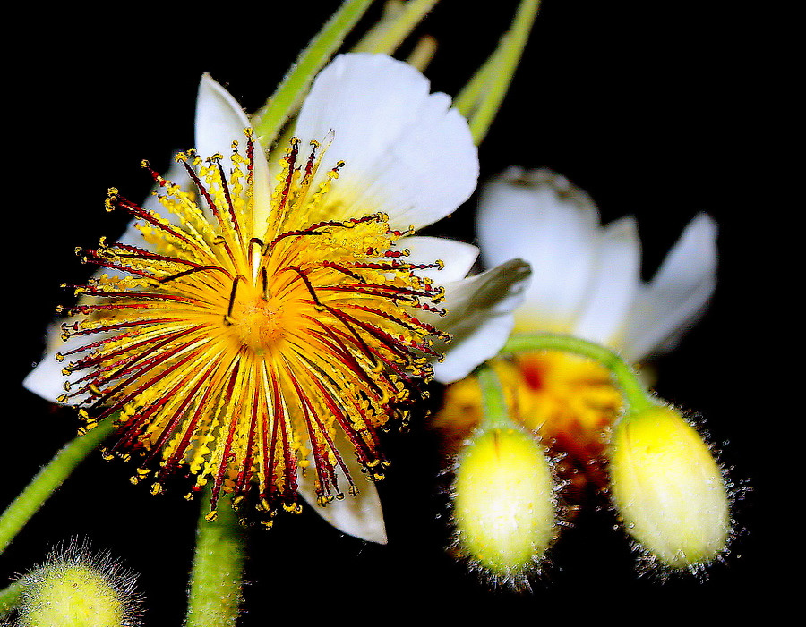 "фото ""HAPPY NEW YEAR!!!!"" метки: природа, цветы"