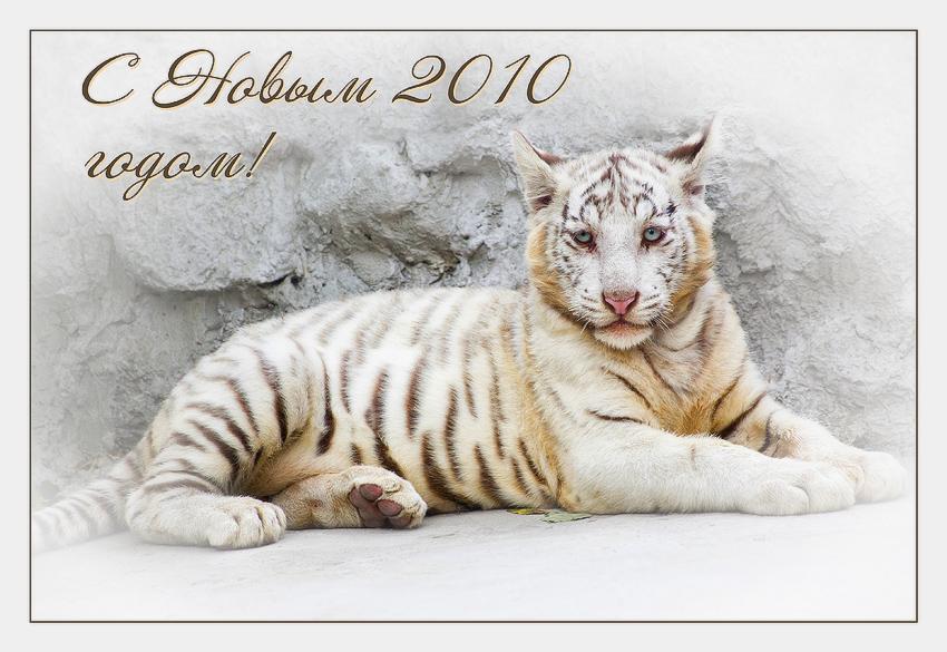 """фото """"С Новым годом!"""" метки: природа, дикие животные"""