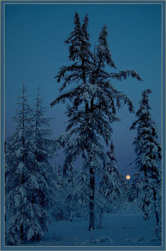 """фото """"Новогодняя ночь"""" метки: пейзаж, зима, лес"""