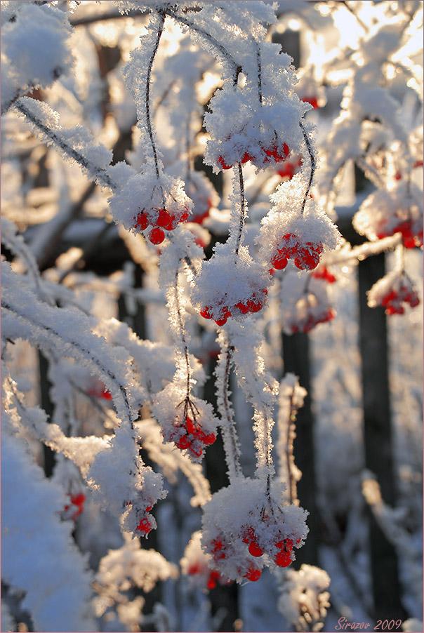 """фото """"С Новым Годом, друзья!"""" метки: пейзаж, природа,"""