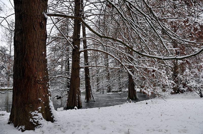 "фото ""white carpet"" метки: пейзаж, зима"