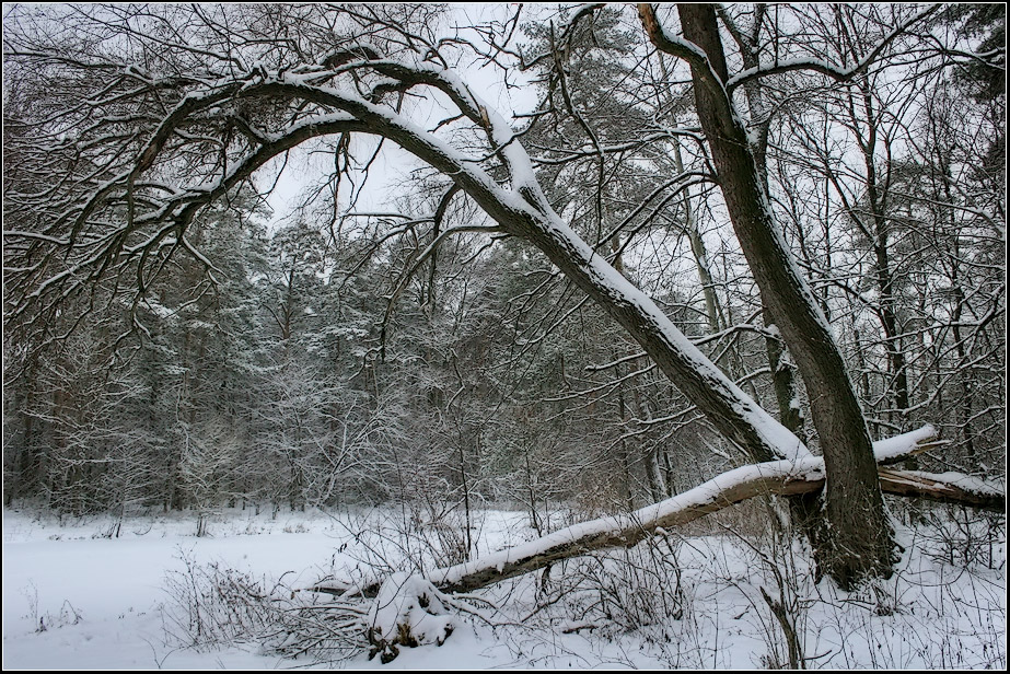 """photo """"Winter Holidays"""" tags: landscape, forest, winter"""