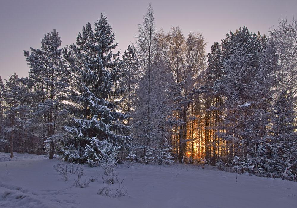 """фото """"С Новым Годом! Happy new year!"""" метки: пейзаж, зима, лес"""