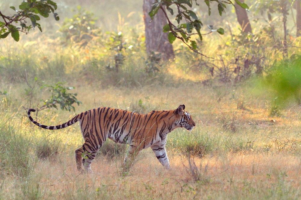 """фото """"2010"""" метки: природа, дикие животные"""