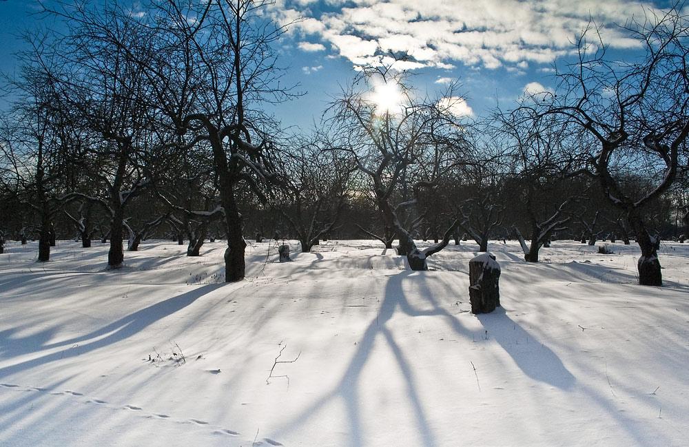 """фото """"Яблочный сад в декабре"""" метки: пейзаж, зима"""