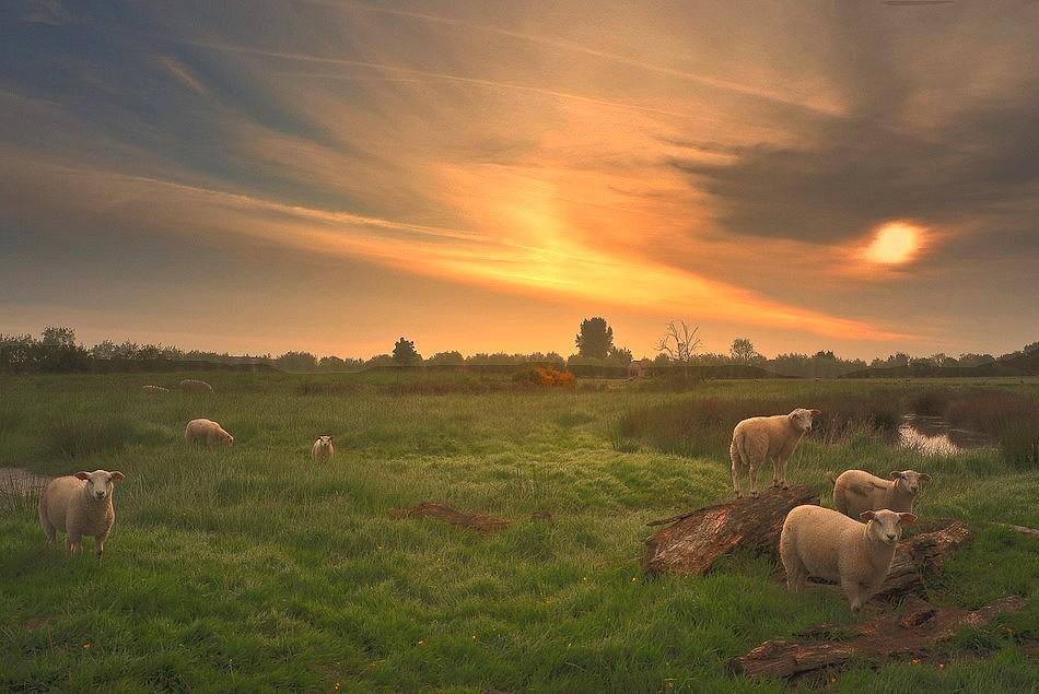 """фото """"***"""" метки: пейзаж, природа, домашние животные"""