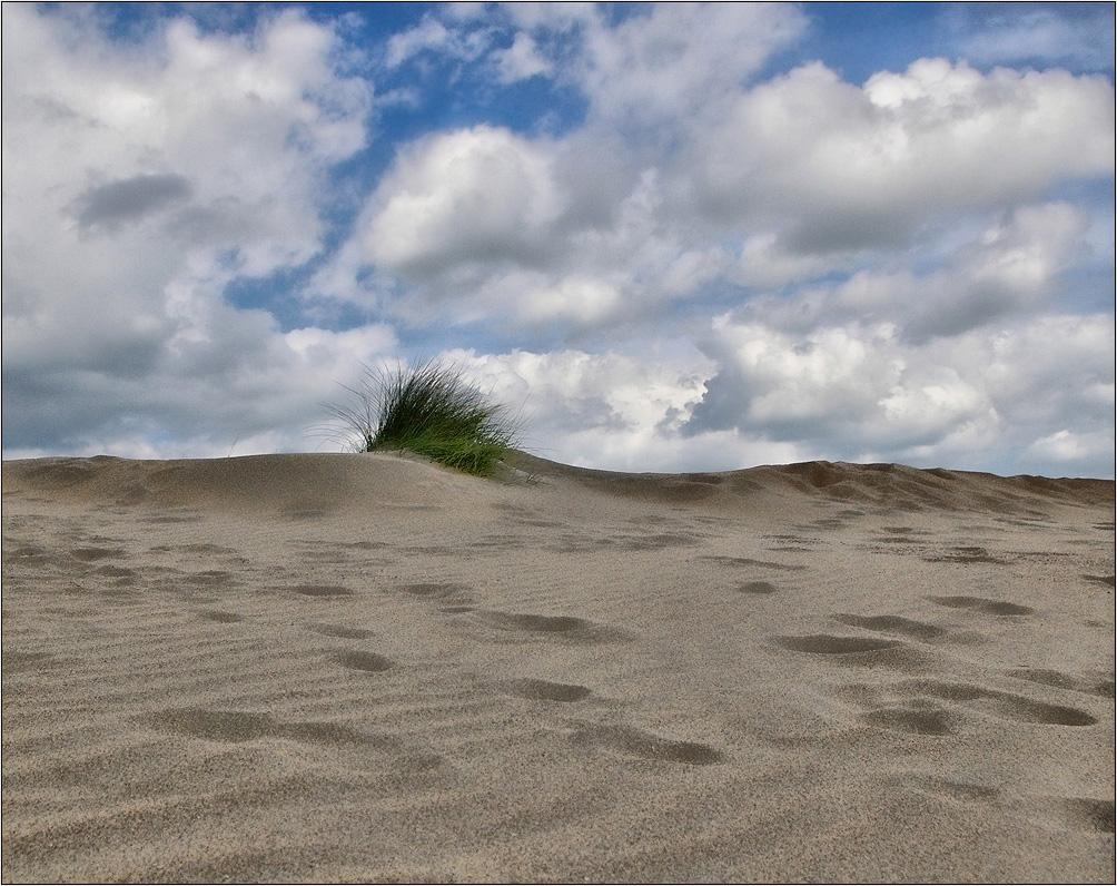 """фото """"In Dunes"""" метки: пейзаж, лето"""