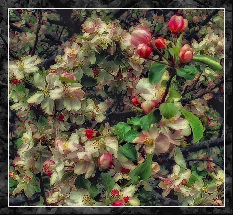 """фото """"мечты о весне"""" метки: природа, цветы"""
