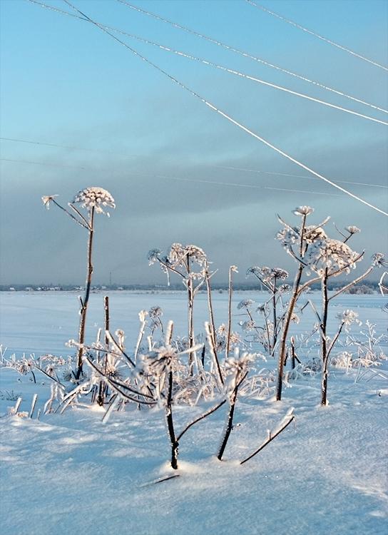 """фото """"+ провода"""" метки: пейзаж, зима"""
