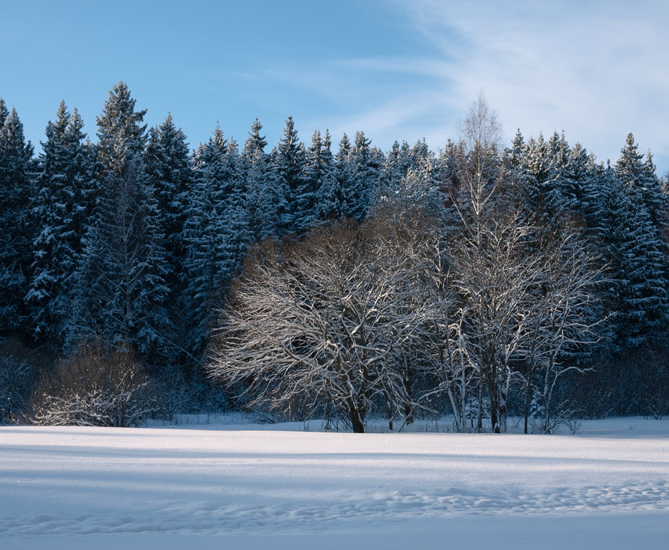 "photo ""Quiet New Year"" tags: landscape, winter"