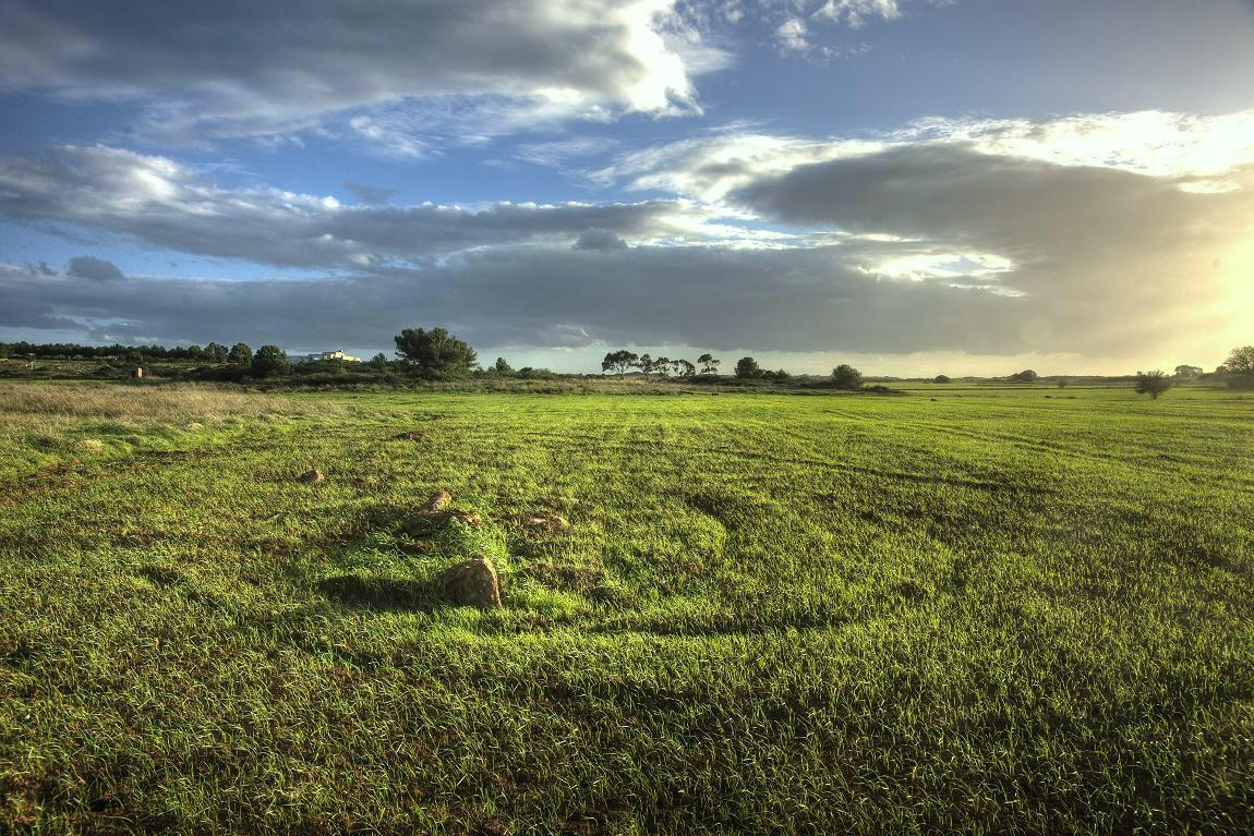 "фото ""The field"" метки: ,"