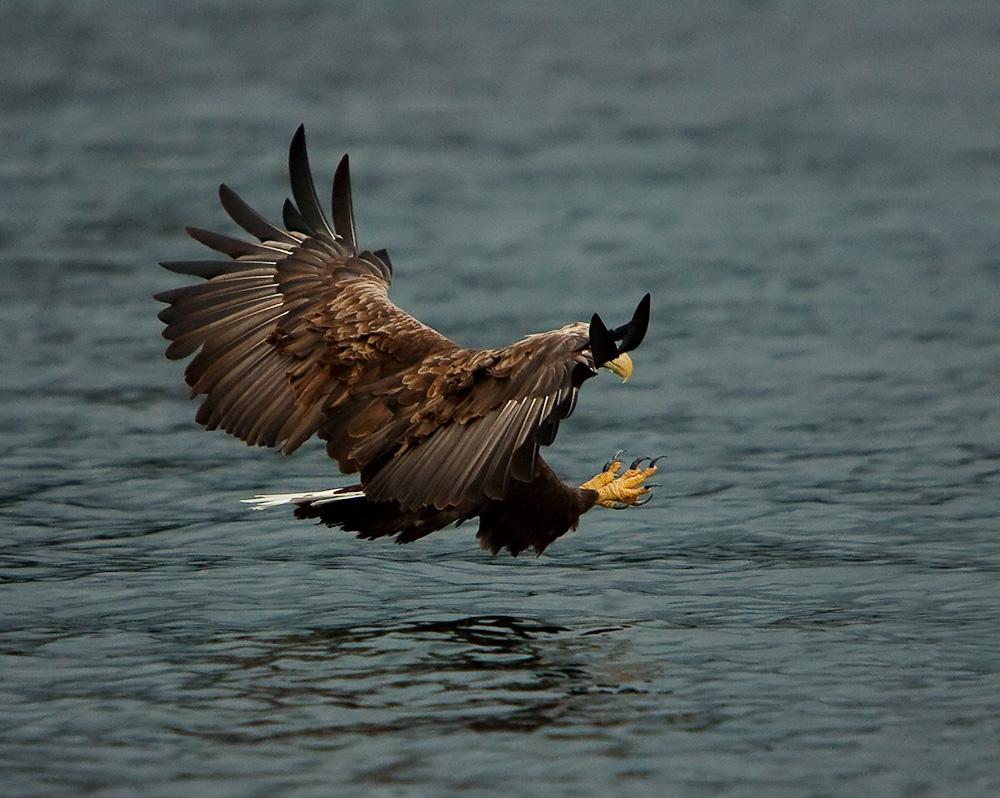 "photo ""Catch..."" tags: nature, landscape, autumn, wild animals"
