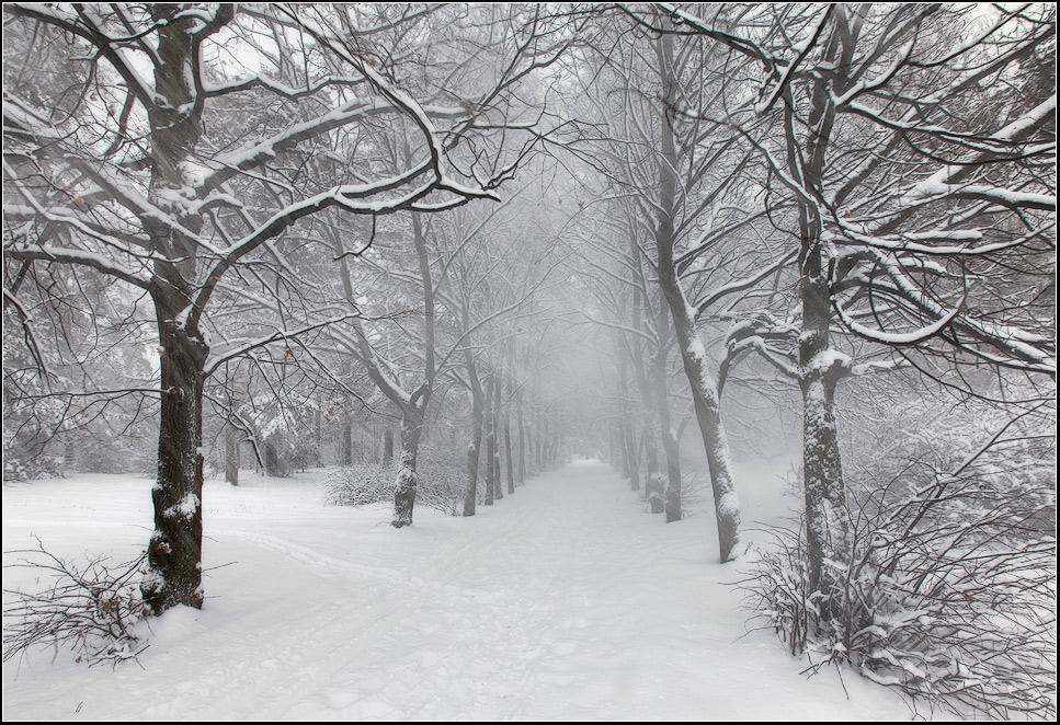 "photo ""blizzard"" tags: landscape, forest, winter"