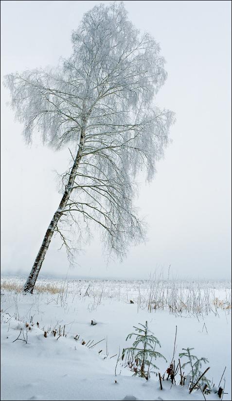 """фото """"Времена года: зима"""" метки: пейзаж, закат, зима"""