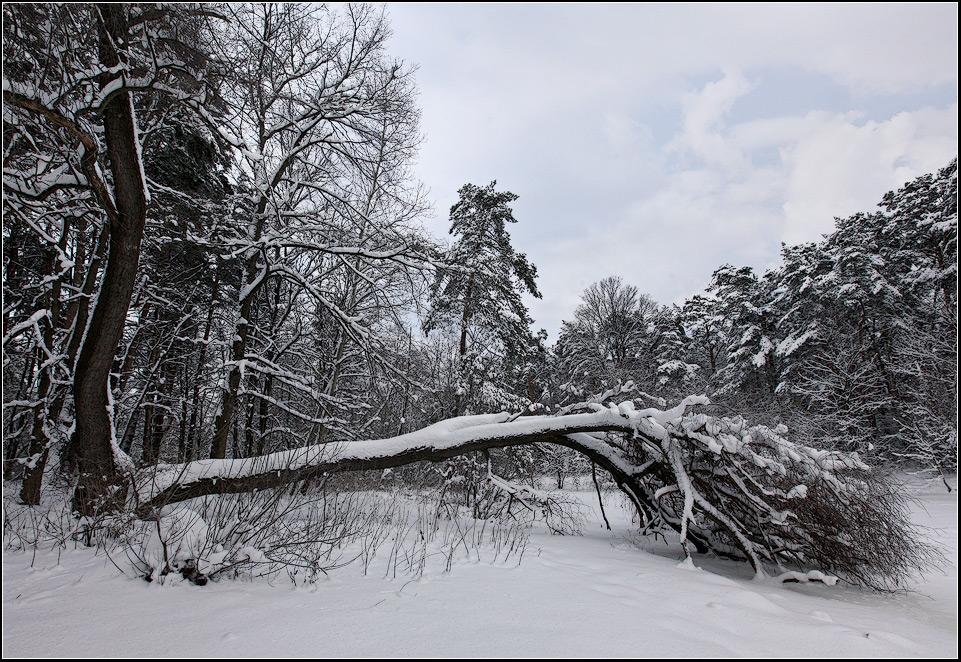 "фото ""Зимние потери"" метки: пейзаж, зима, лес"