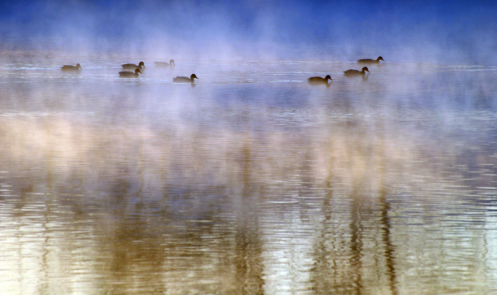 "photo ""***"" tags: landscape, nature, wild animals, winter"