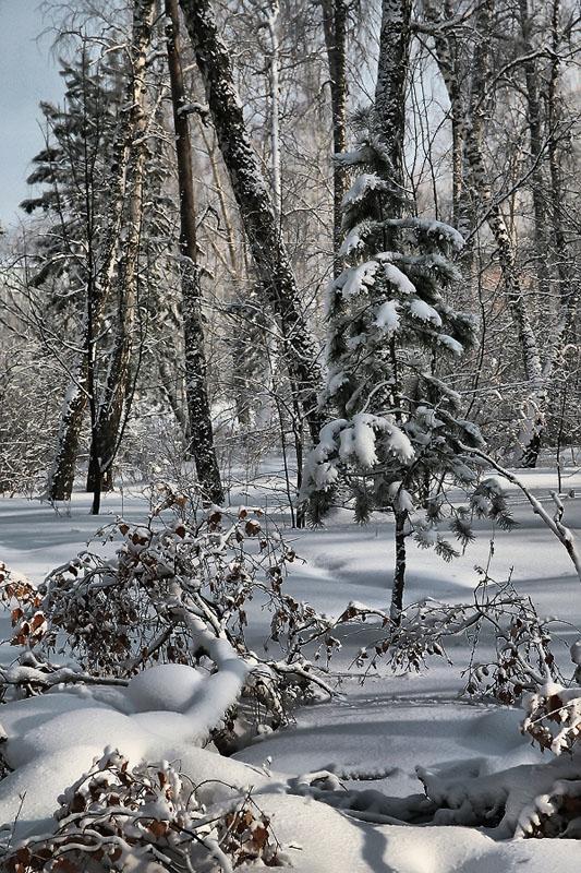 """фото """"осенний снежок"""" метки: пейзаж, осень"""
