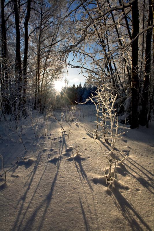 """фото """"Морозный закат"""" метки: пейзаж, зима"""