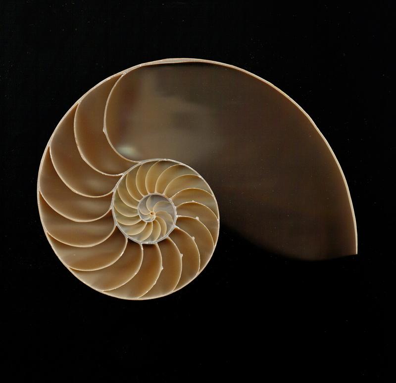 """photo """"Chambered Nautilus"""" tags: macro and close-up, abstract,"""
