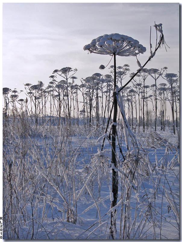 """фото """"Одуванчиковый лес"""" метки: пейзаж, природа, зима, цветы"""