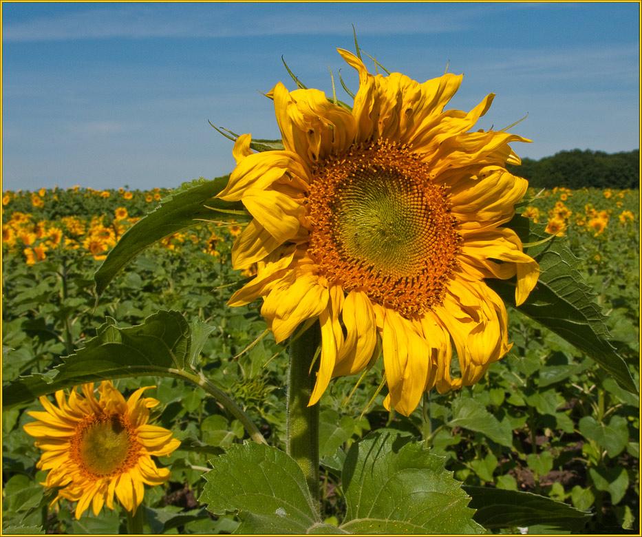 "photo ""Locators sun"" tags: landscape, summer"