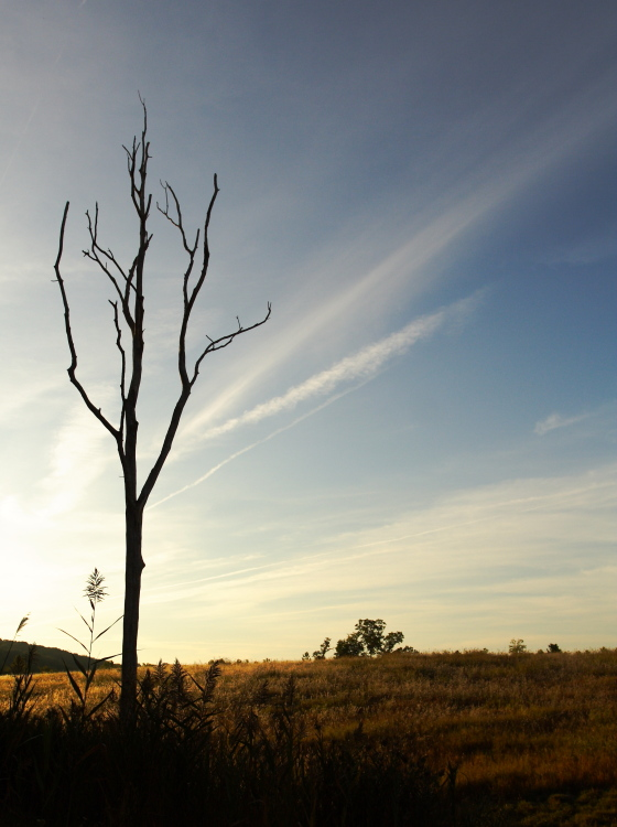 "photo ""Lonely Tree"" tags: landscape, travel, North America, summer"