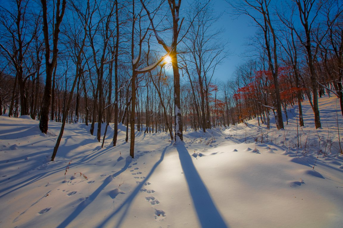 "фото ""Мороз и солнце"" метки: пейзаж, зима, лес"