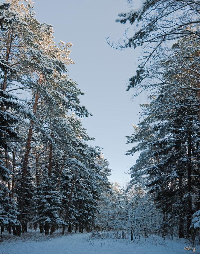 "фото ""Бело-голубая тишина"" метки: пейзаж, зима, лес"