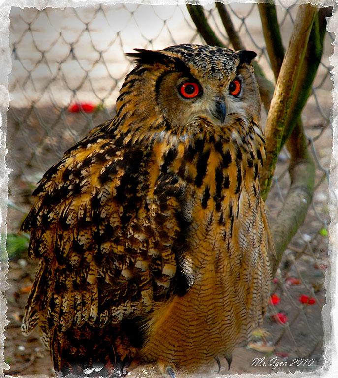 "photo ""Merry owl"" tags: nature, wild animals"