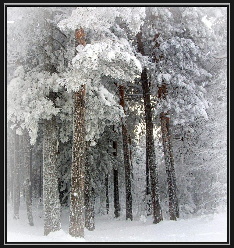 "фото ""В зимнем лесу"" метки: пейзаж, зима, лес"