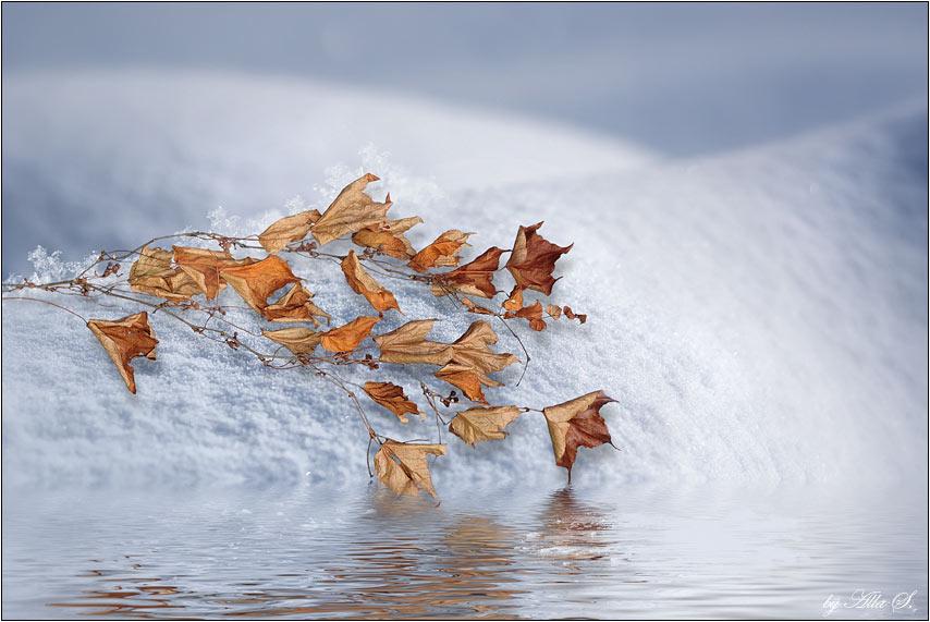 """фото """"В каком источнике живой воды напиться? Чтоб вновь ожить."""" метки: пейзаж, фотомонтаж, зима"""