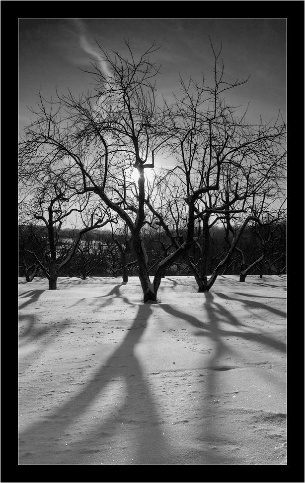 """фото """"Предзакатная геометрия"""" метки: пейзаж, закат, зима"""