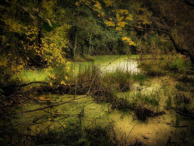"""фото """"Осень на болоте"""" метки: пейзаж, лес"""