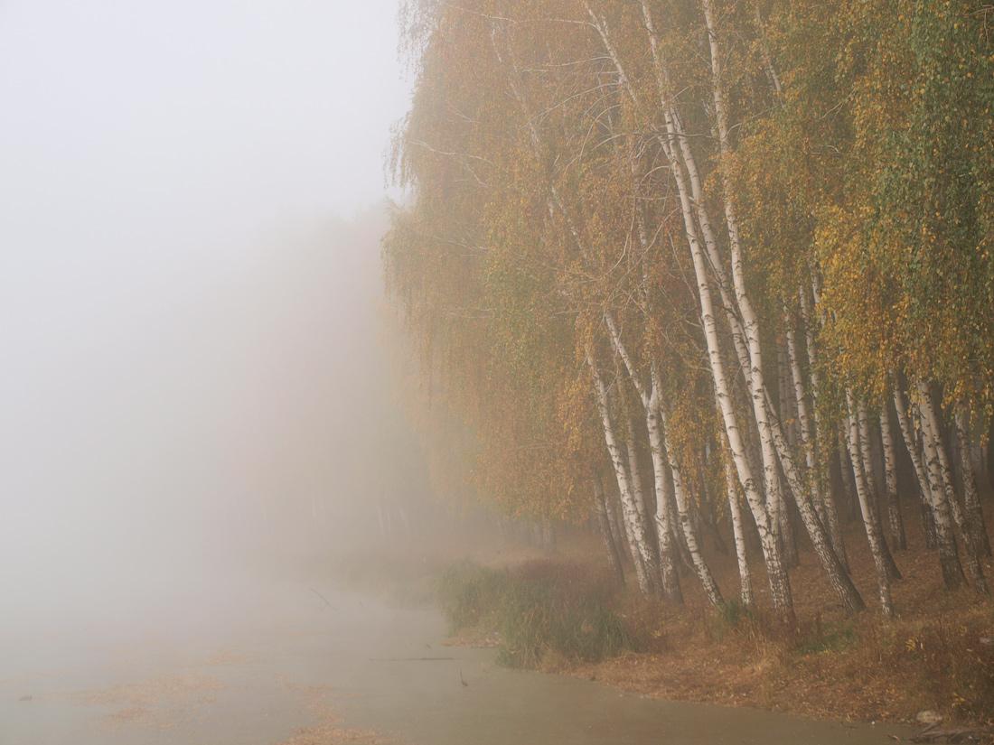 """фото """"Утро туманное"""" метки: пейзаж, осень"""